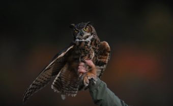 picture of owl on man's hand